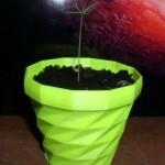 фото ростка ели в гршке от 3D принтера