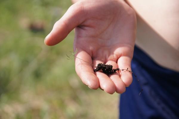 фото ростка ели на ладони