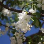 """Теплая весна"" Фото Игоря Чувакина"