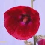 """Фото Игоря Чувакина """"Красный фонарик"""""""