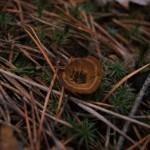 """Засохший гриб..."" Фото Игоря Чувакина"