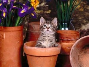cats72 - Всё о растениях и животных