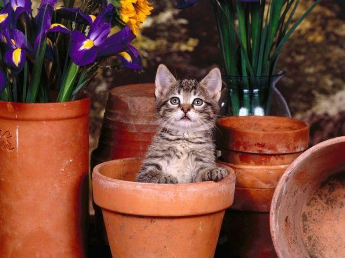 cats72 - Живой сайт Тюмени