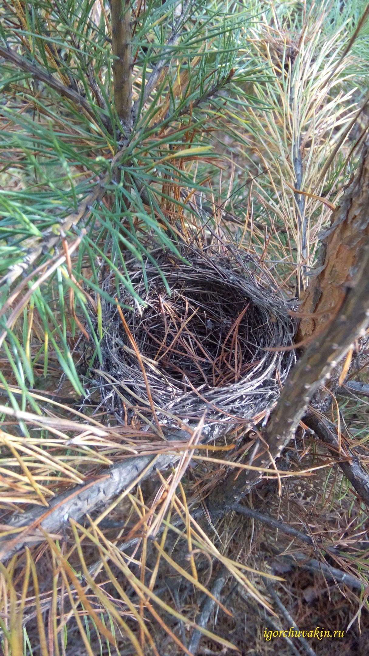 Гнездо. фото Игоря Чувакина