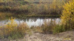 Лесные озера. фото Игоря Чувакина