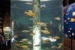 Речные рыбы, окуни, плотва