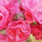 Городская цветочная коллекция