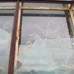 Березы в окнах