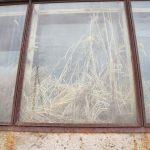 Трава в окнах