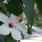 В цветущем раю