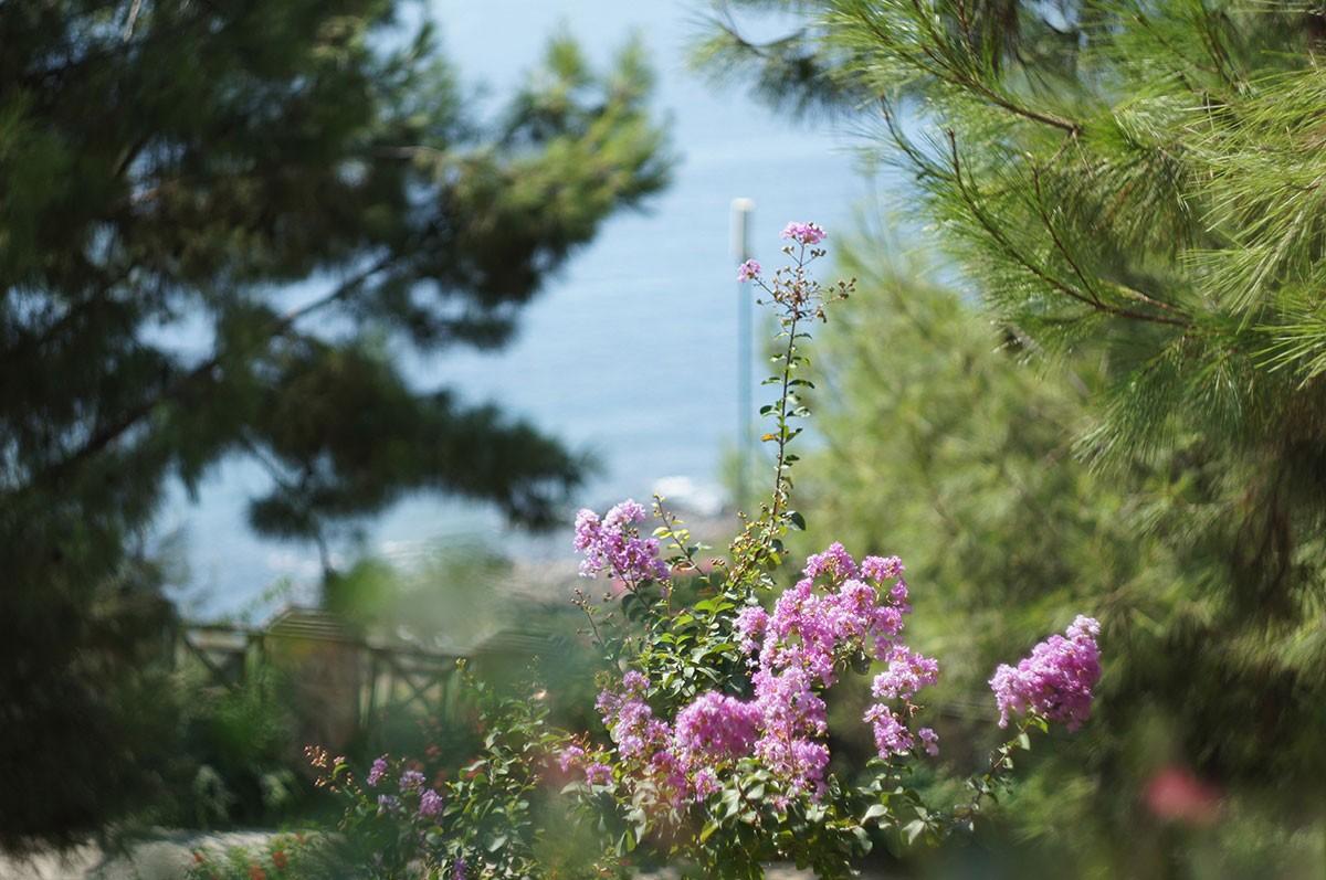 В цветущем раю. Отель Utopia World. Турция