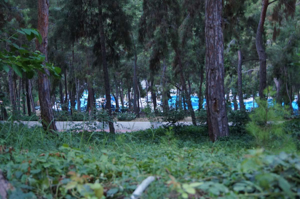 Утро. Хвойники. Отель Utopia World Турция.