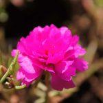 Яркий цветок