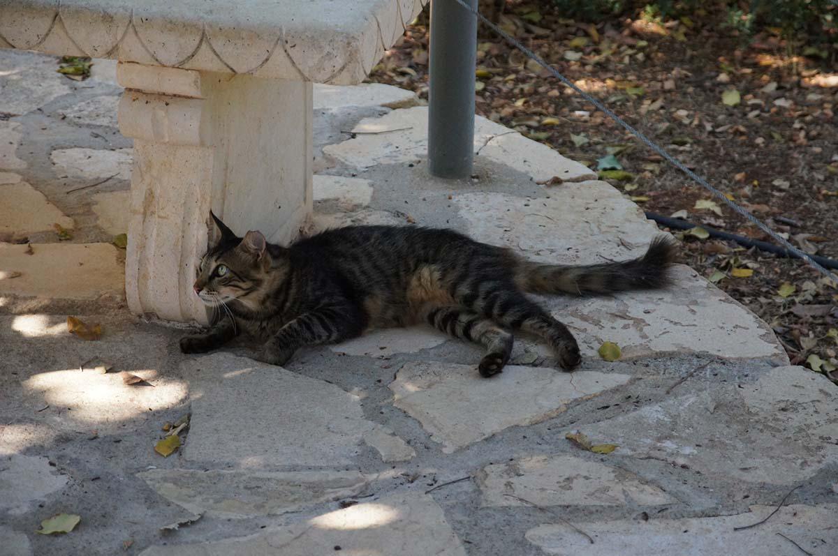 Самый главный, Cyprus Paphos zoo, Кипрский зоопарк, Пафос