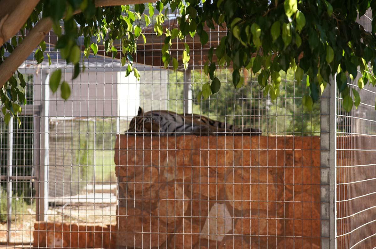 Кошка спит, она устала, Cyprus Paphos zoo, Кипрский зоопарк, Пафос