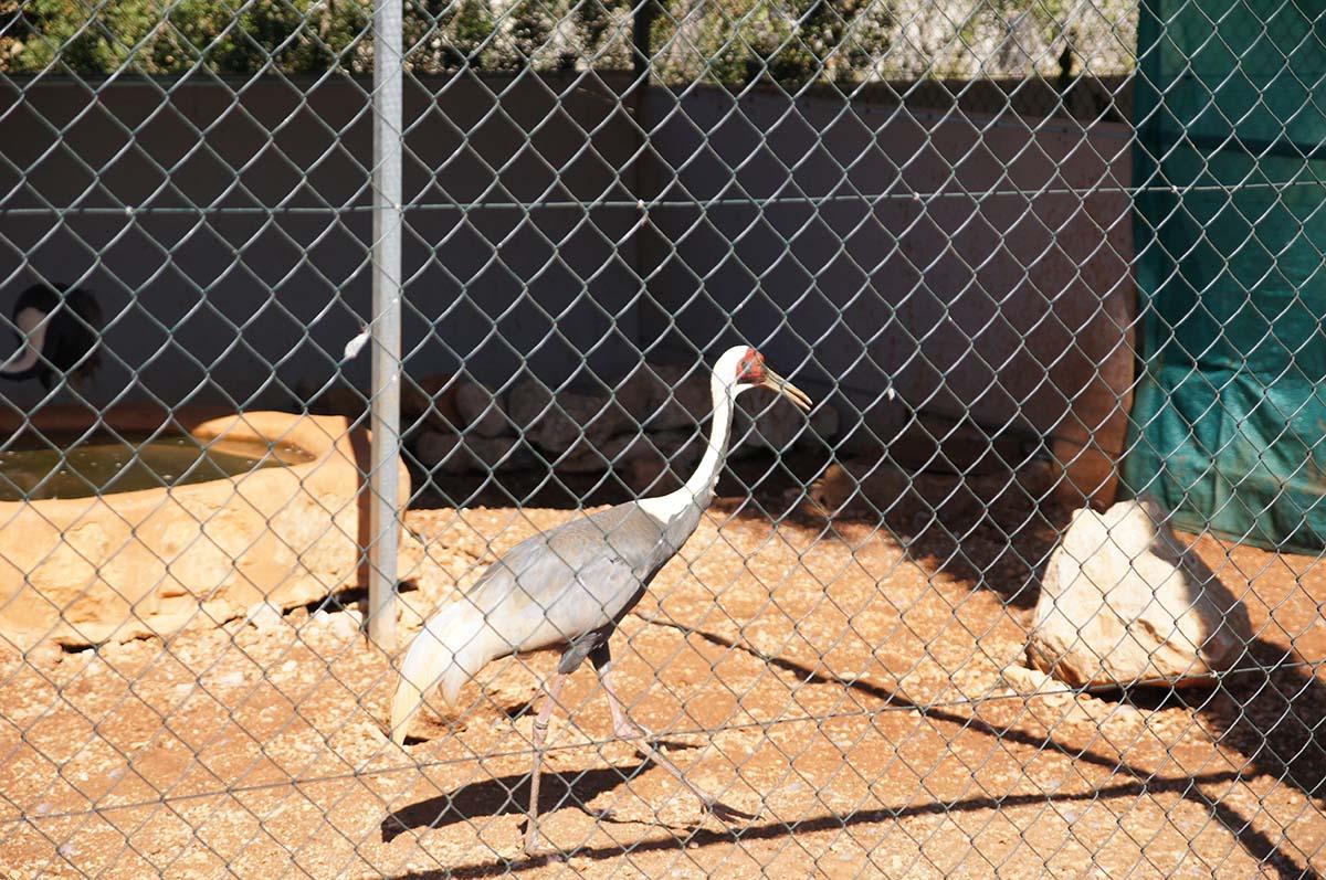 Чеканя шаг, Cyprus Paphos zoo, Кипрский зоопарк, Пафос
