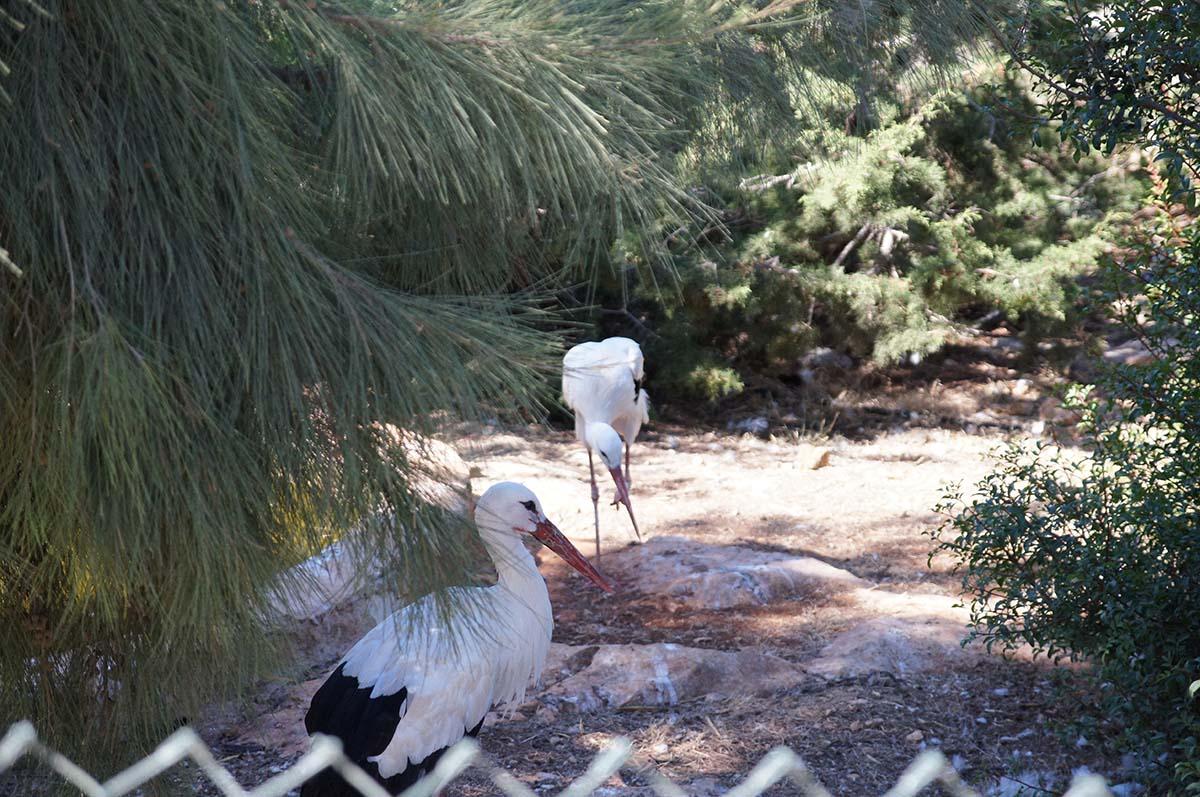 Цапли, Cyprus Paphos zoo, Кипрский зоопарк, Пафос
