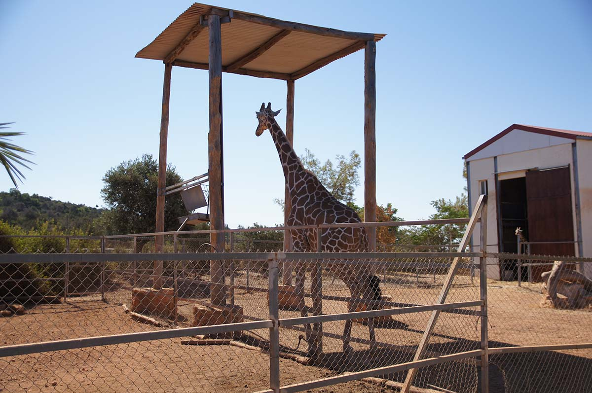 Под навесом, Cyprus Paphos zoo, Кипрский зоопарк, Пафос