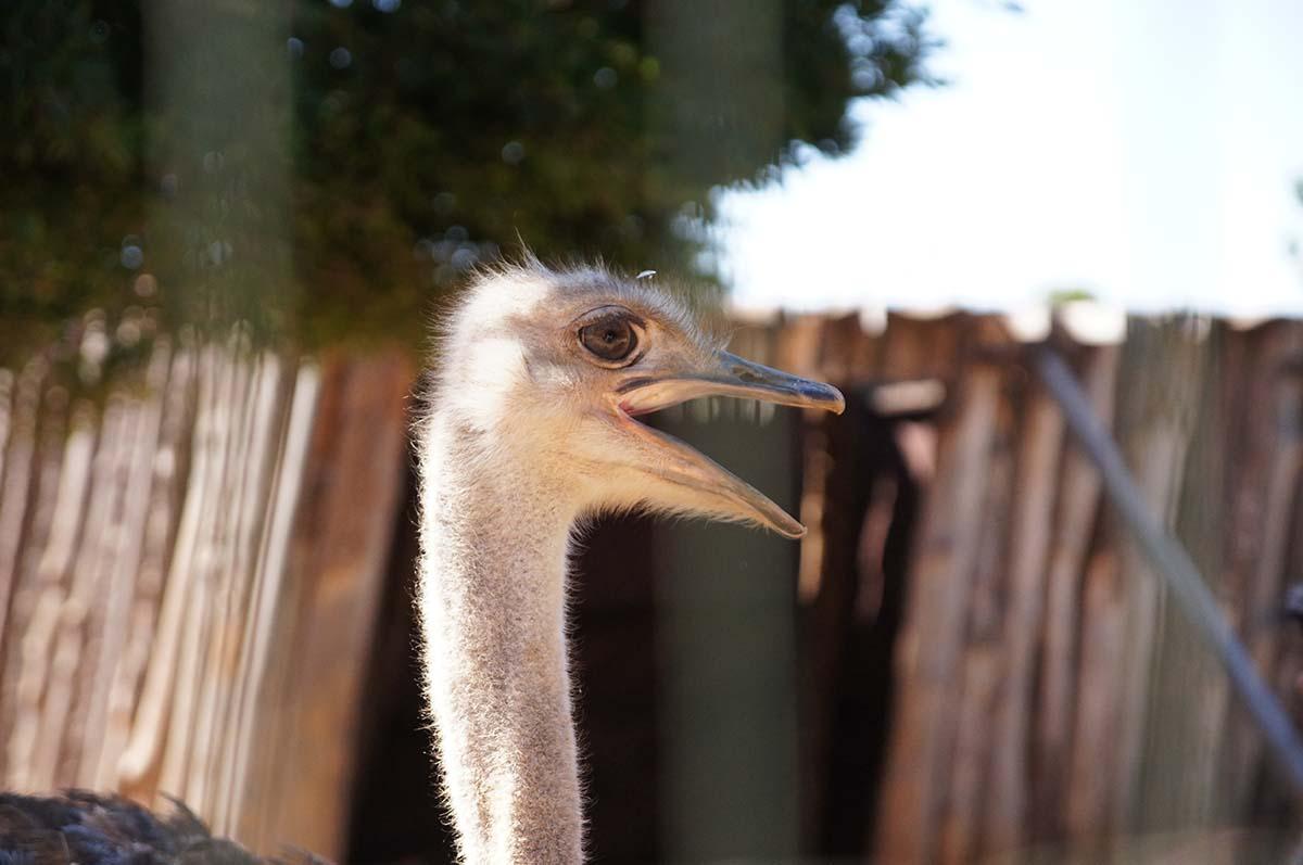 Вперед!!! Cyprus Paphos zoo, Кипрский зоопарк, Пафос
