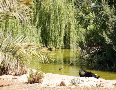 Зоопарк. Кипр. Пафос