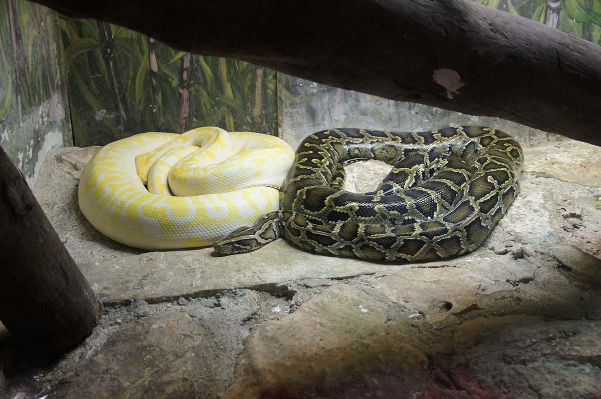 Ин и Янь, Cyprus Paphos zoo, Кипрский зоопарк, Пафос