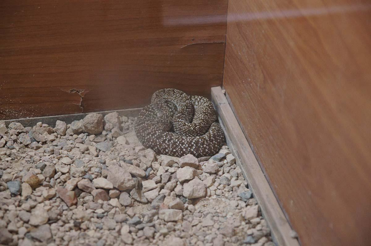 Скукожилась, Cyprus Paphos zoo, Кипрский зоопарк, Пафос