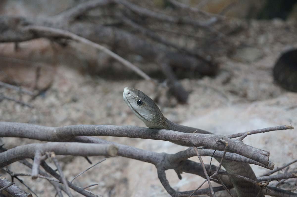 Замаскировалась, Cyprus Paphos zoo, Кипрский зоопарк, Пафос