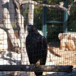Орел на Кипре