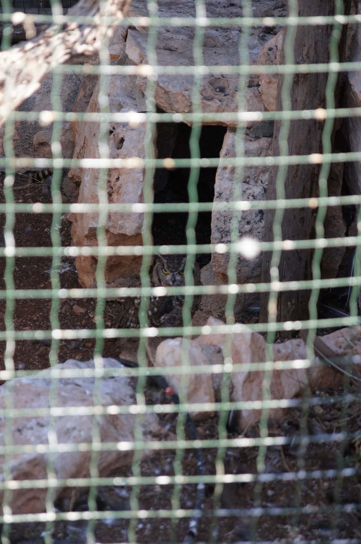 Сова, Cyprus Paphos zoo, Кипрский зоопарк, Пафос