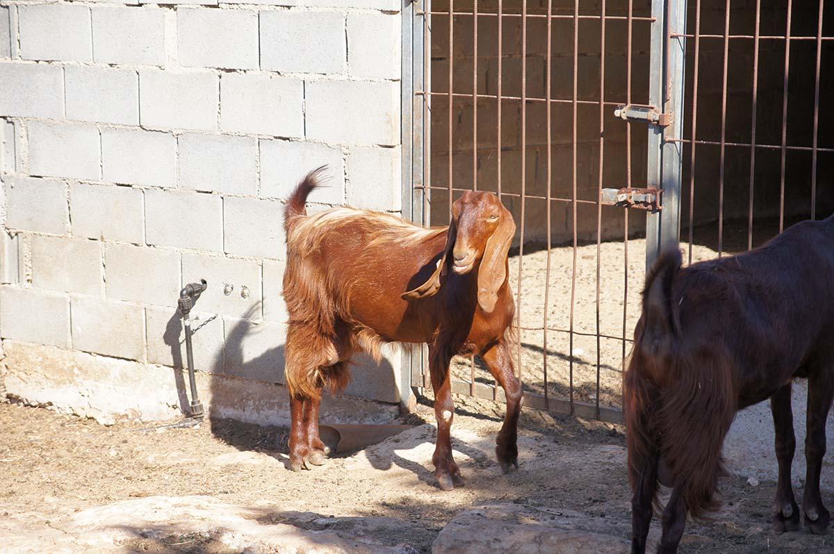 Неизвестный науке зверь, Cyprus Paphos zoo, Кипрский зоопарк, Пафос