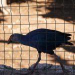 Птица с разноцветным клювом