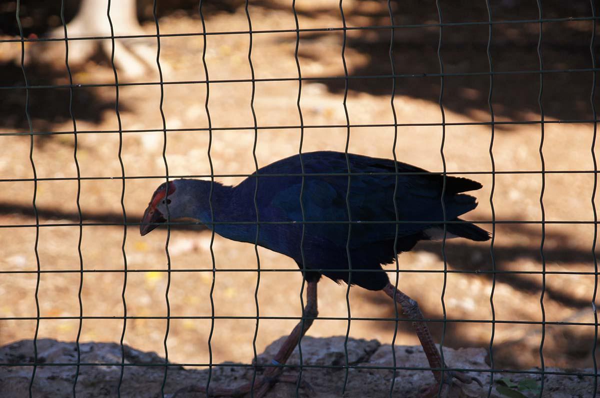 Птица с разноцветным клювом, Cyprus Paphos zoo, Кипрский зоопарк, Пафос