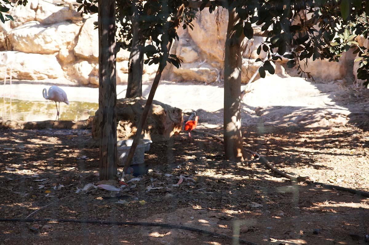 Фламинго, Cyprus Paphos zoo, Кипрский зоопарк, Пафос