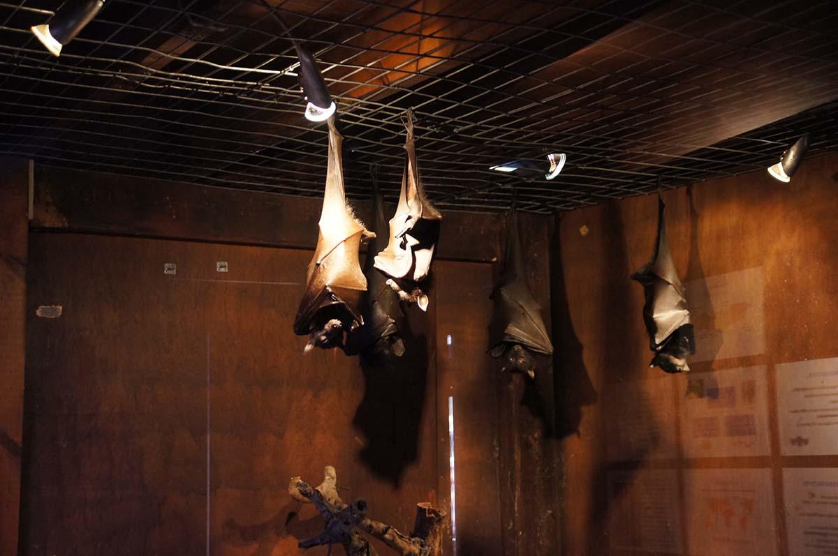 Летучие мышки отдыхают, Cyprus Paphos zoo, Кипрский зоопарк, Пафос