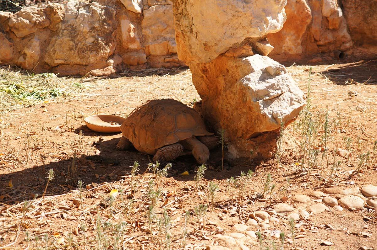 Черепаха прячется в тени, Cyprus Paphos zoo, Кипрский зоопарк, Пафос