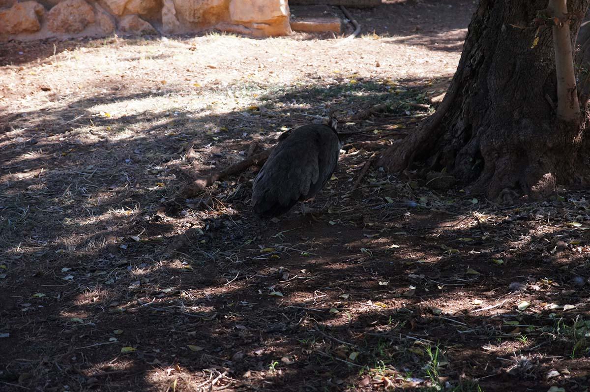 А хвост пушить я не буду, Cyprus Paphos zoo, Кипрский зоопарк, Пафос