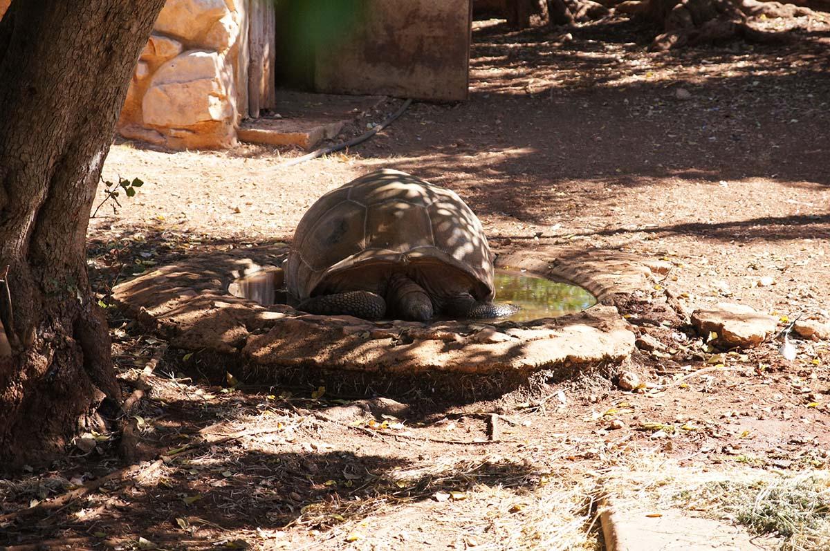 Черепаха в воде, Cyprus Paphos zoo, Кипрский зоопарк, Пафос