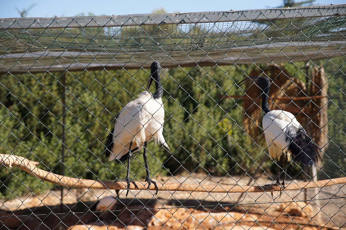 Опять цапли, Cyprus Paphos zoo, Кипрский зоопарк, Пафос