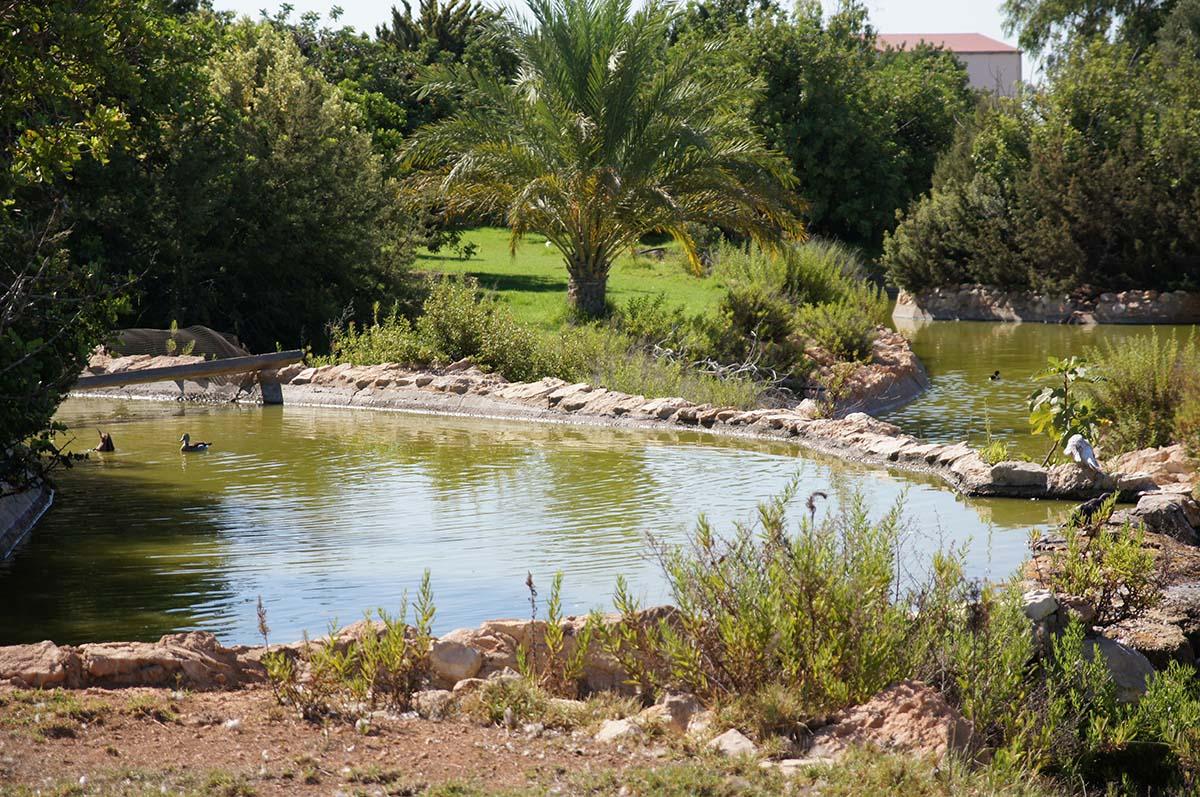 Плывут, Cyprus Paphos zoo, Кипрский зоопарк, Пафос