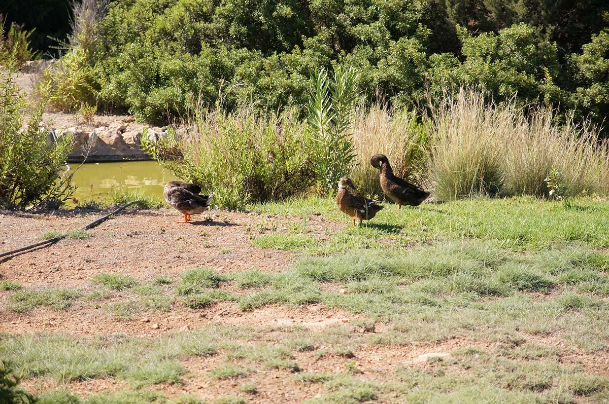 Три птицы, Cyprus Paphos zoo, Кипрский зоопарк, Пафос