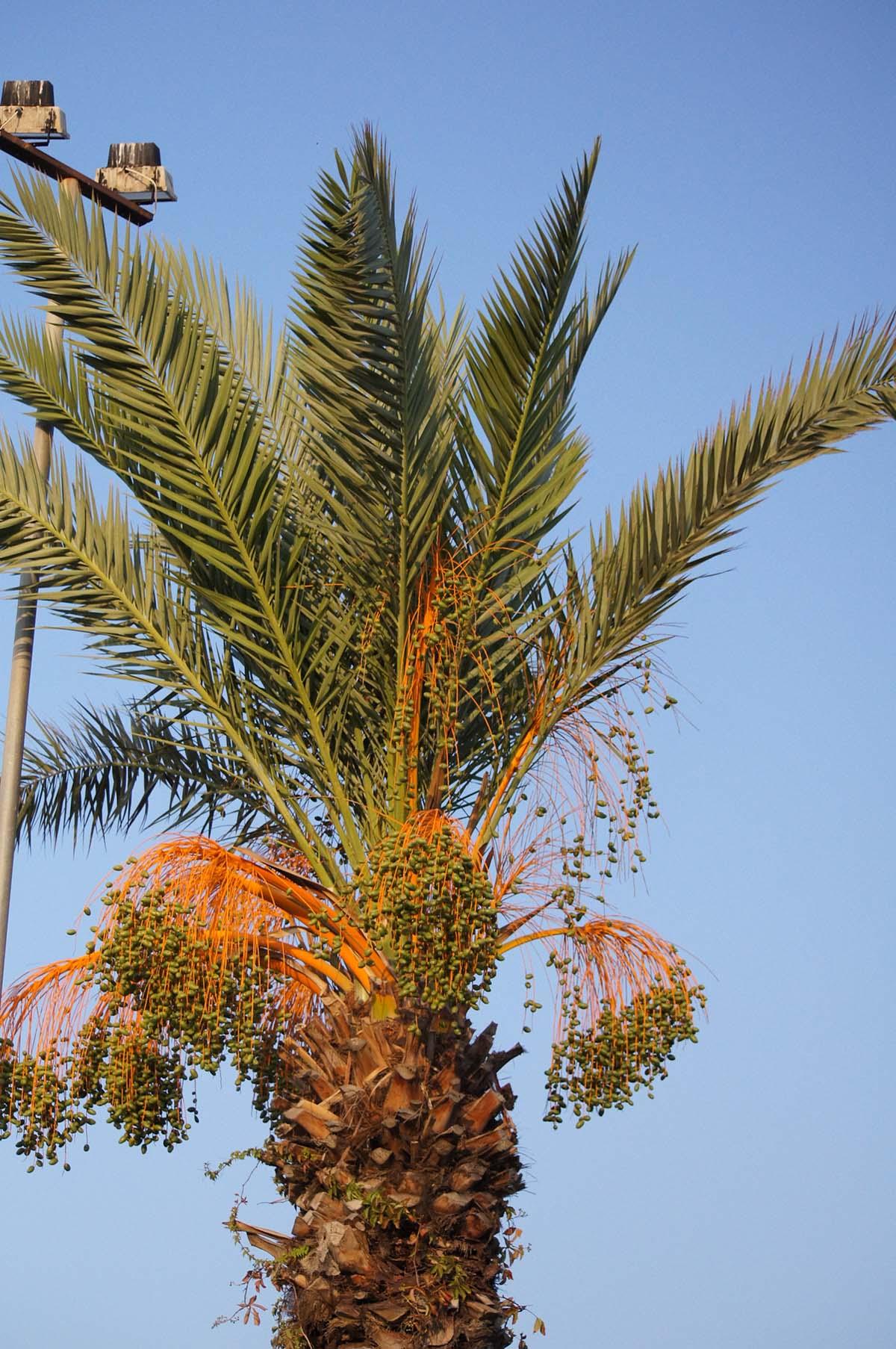 Пальма под солнцем. Отель St. George. Paphos.