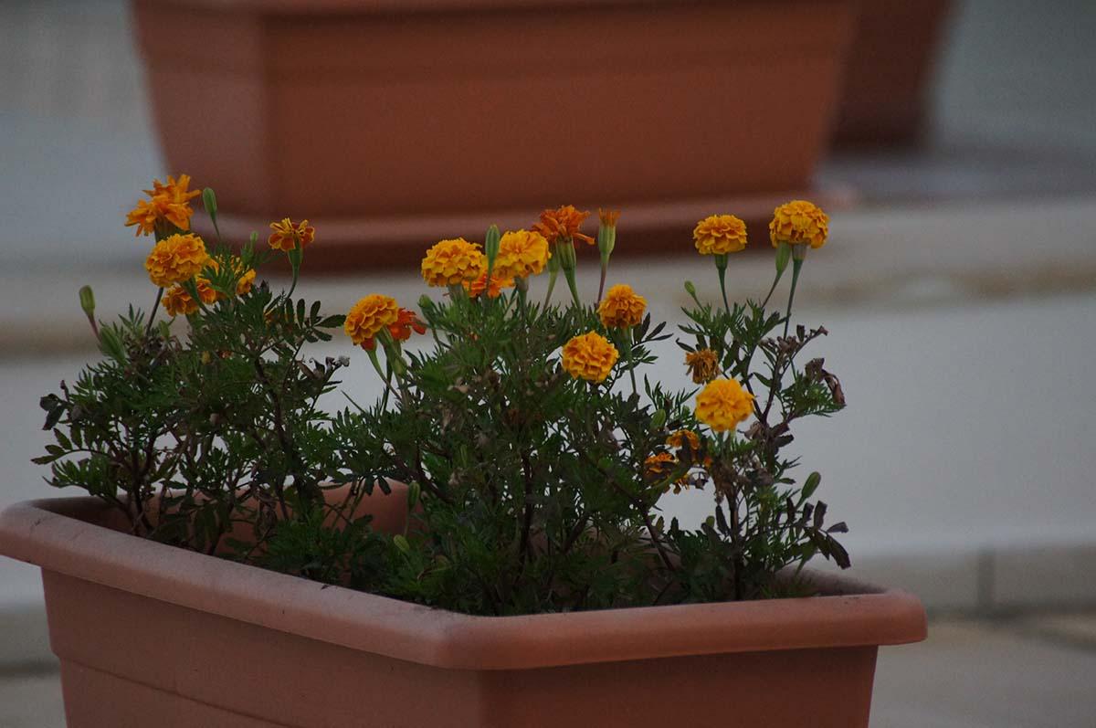 Цветочки в горшочке. Отель St. George. Paphos.