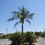 Пальма в круге