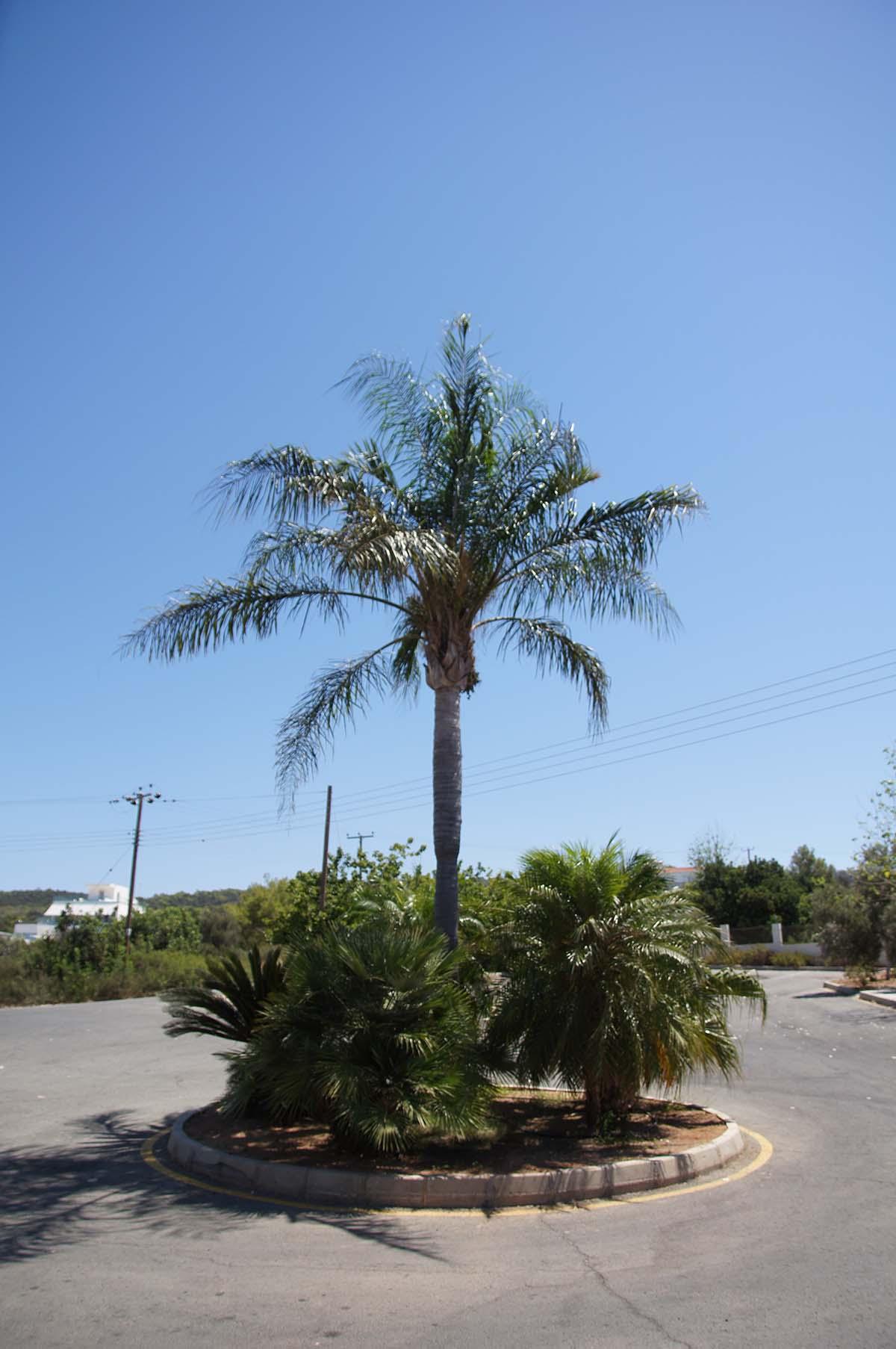 Пальма в круге. Отель St. George. Paphos.