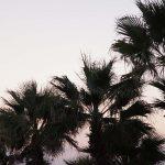 Больше пальм