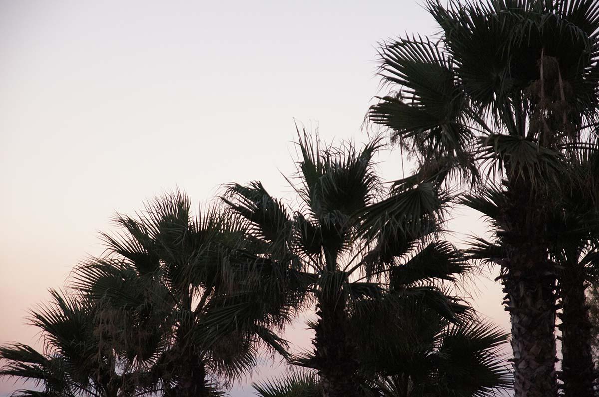 Больше пальм. Отель St. George. Paphos.