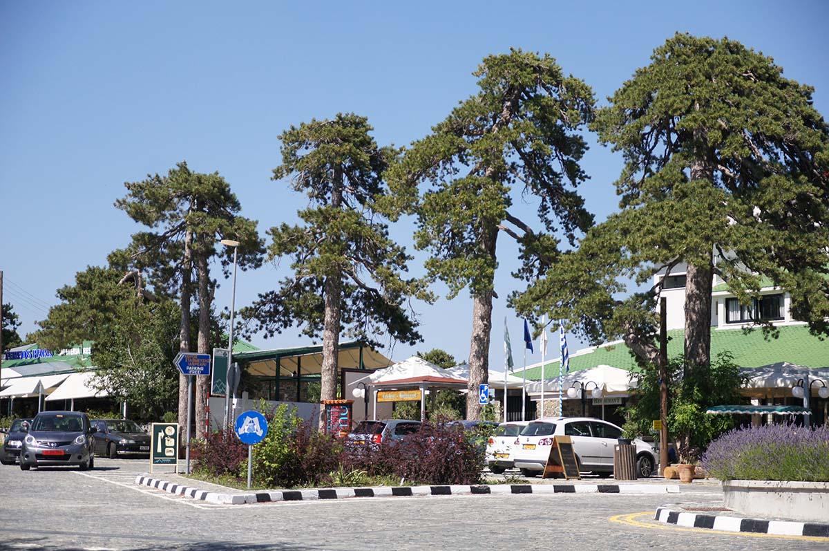 Кедры, Кипр, Киккос, Cyprus, Panagia tou Kykkou
