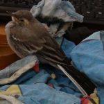 Птица на дороге