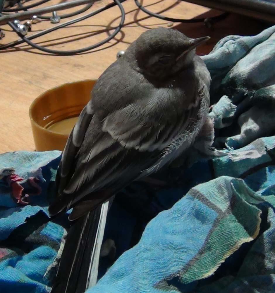 Птица спит на столе